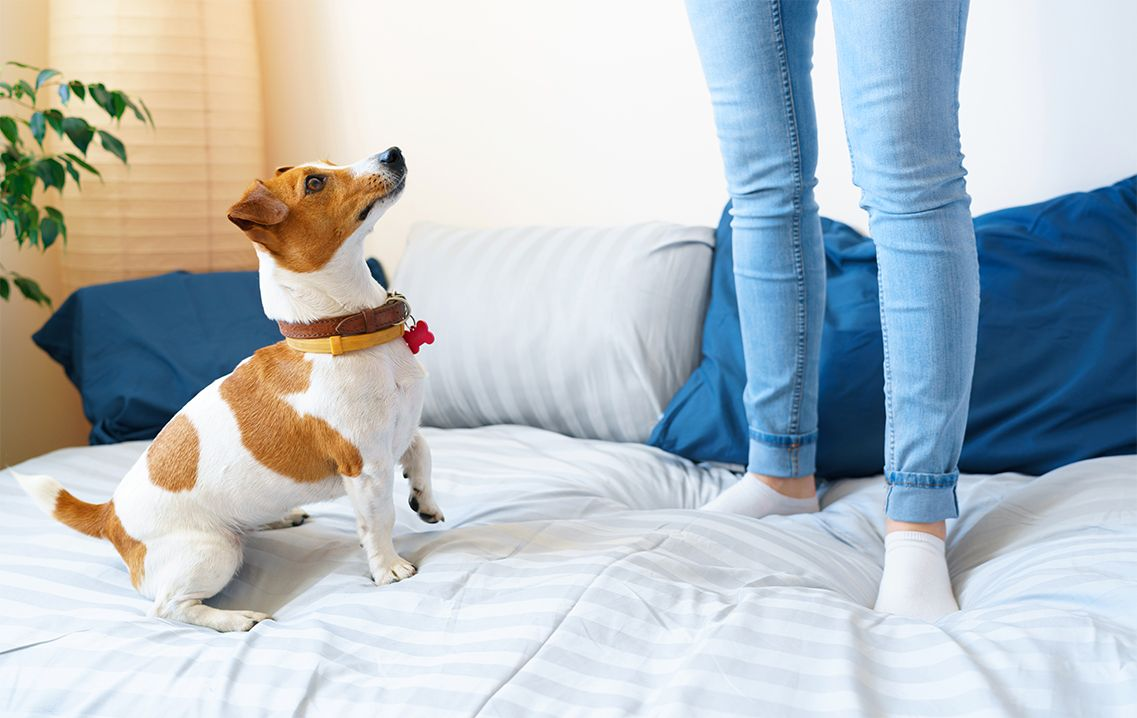 Benessere del Jack Russell